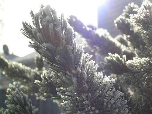 Christmas2010 139
